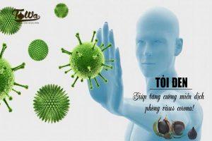 Tỏi đen tăng cường hệ miễn dịch